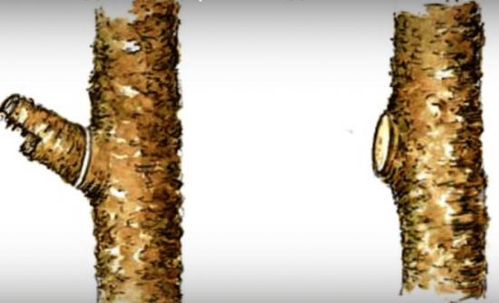 Срезка ветки в три запила