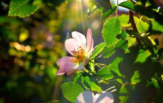 Яблоня, освещённая солнцем
