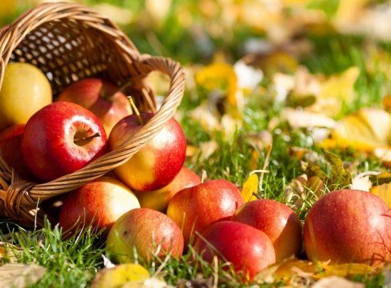 Урожай летних яблок