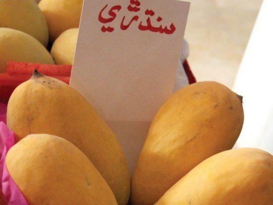 Сорт манго Sindhri