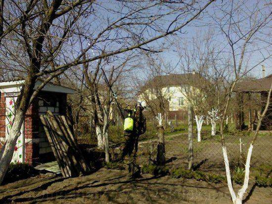 Опрыскивание старой яблони пестицидами