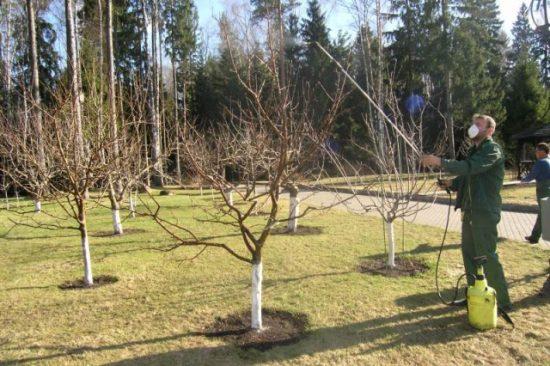 Обработка деревьев фунгицидами