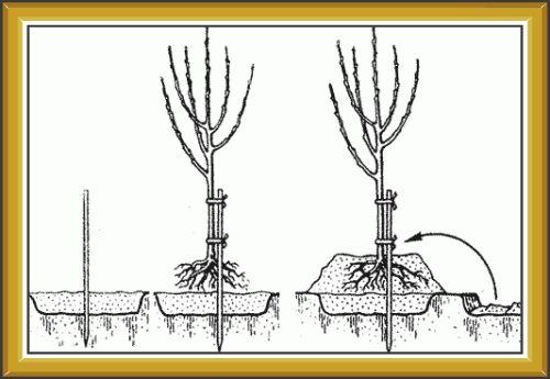 Схема высадки на холм