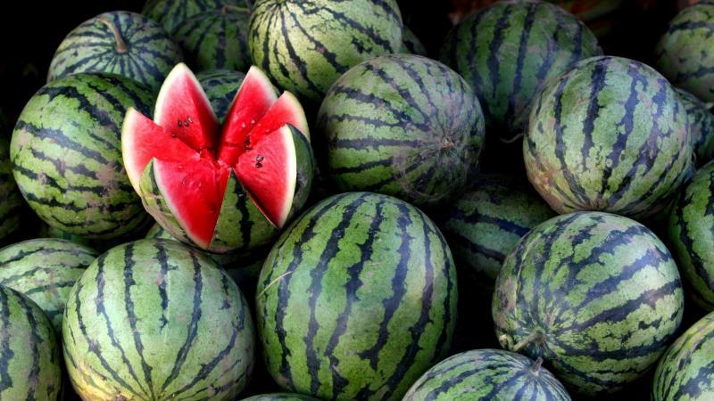Сочный и сладкий арбуз: как грамотно ухаживать за растением