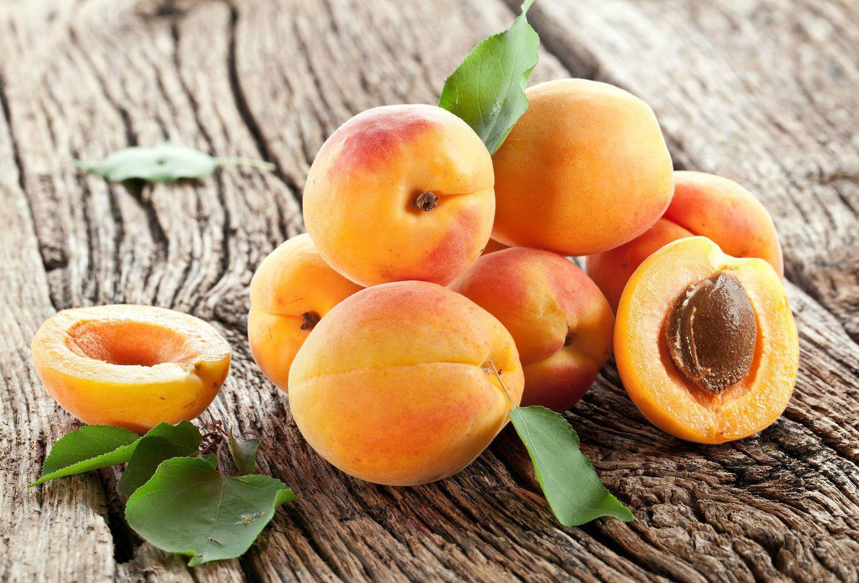 Прививка культурного абрикоса на дичок: как это сделать