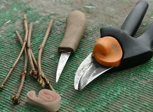 Инструменты для прививки абрикоса
