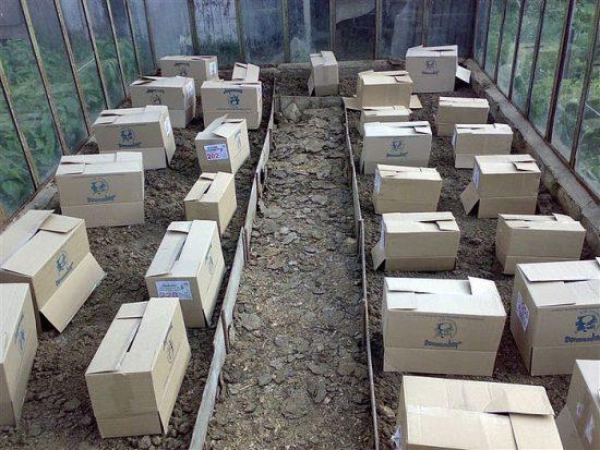 Укрытие в теплице коробками