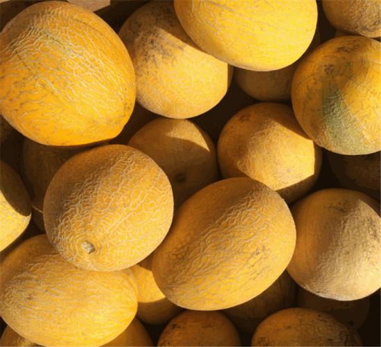 Плоды сорта дыни Лада