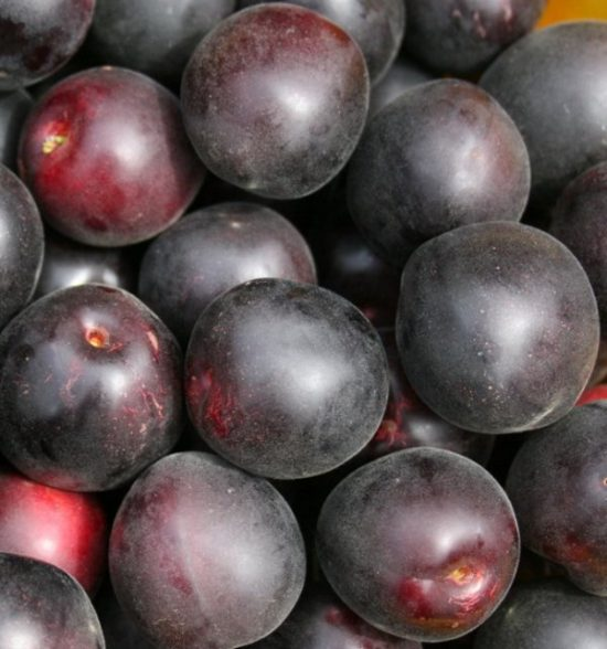 Плоды абрикоса Чёрный бархат