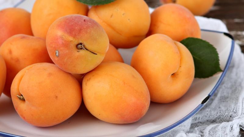 Абрикос Успех — описание и особенности выращивания