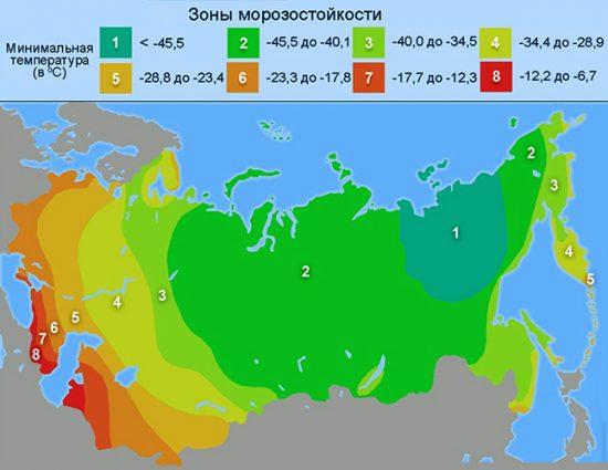 Зоны морозостойкости растений
