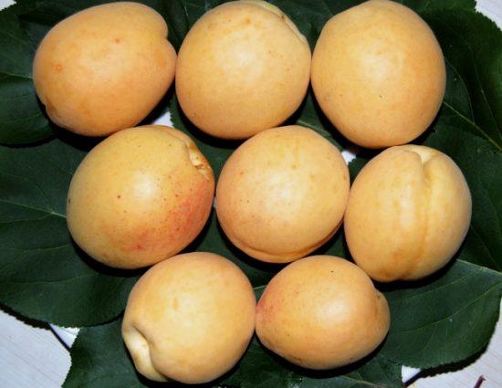 Плоды абрикоса Десертный
