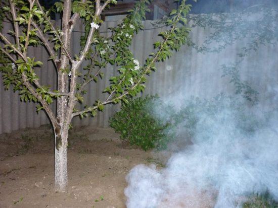 Защита цветущих деревьев от заморозков с помощью задымления
