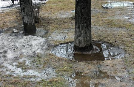 Талая вода у ствола дерева
