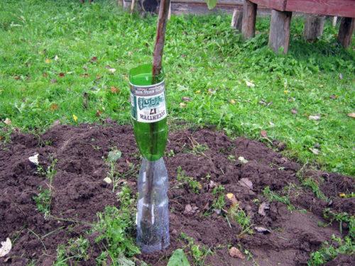 Способ защиты от грызунов с помощью пластиковых бутылок