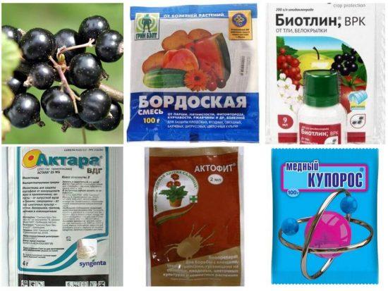 Ядохимикаты для обработки смородины