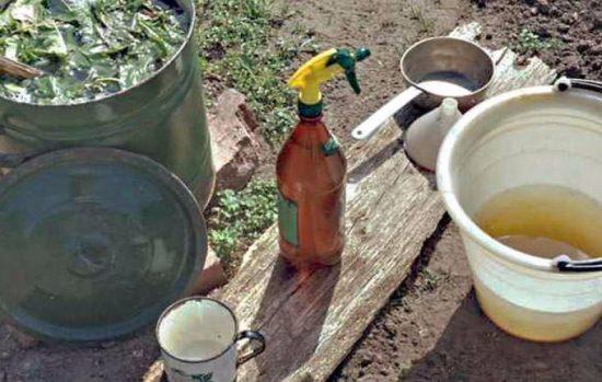 Обработка смородины народными средствами