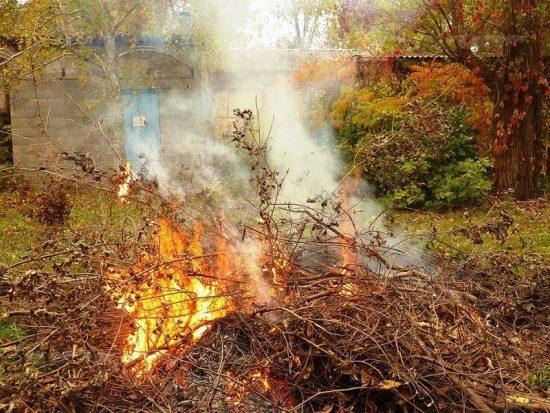 Сжигание старых веток малины