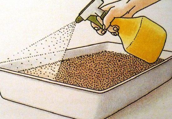 Опрыскивание семян из пульверизатора