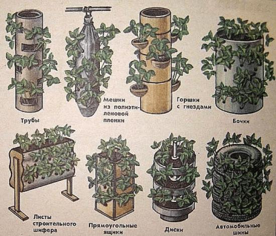 Различные способы посадки клубники