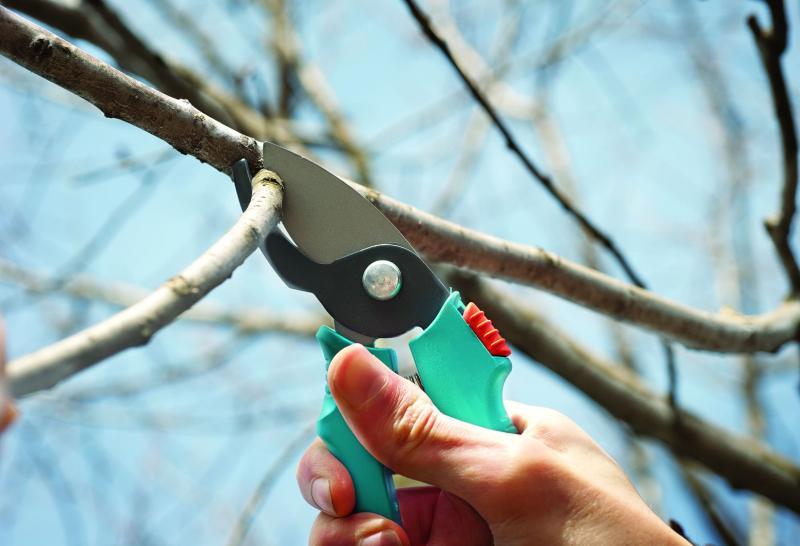 Как обрезать вишнёвое дерево: принципы обрезки древовидной и кустовой вишни
