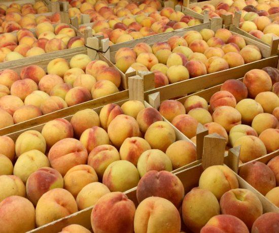 Персики Редхейвен в ящиках