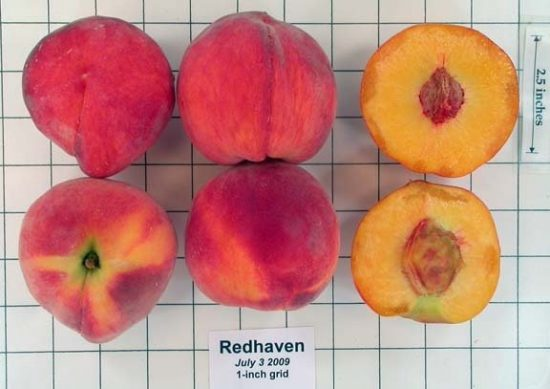 Плод сорта Редхейвен в разрезе