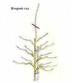 Рисунок обрезки центрального проводника