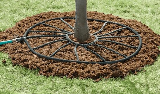 Система капельного орошения дерева