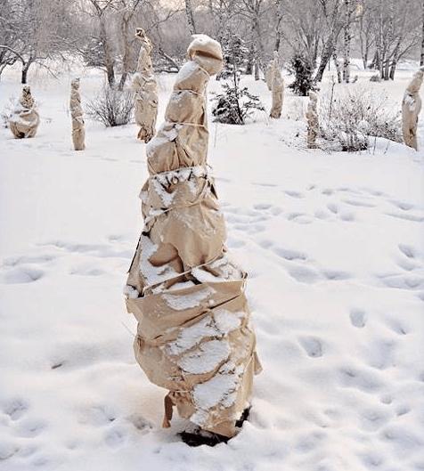 Полностью укрытое молодое дерево