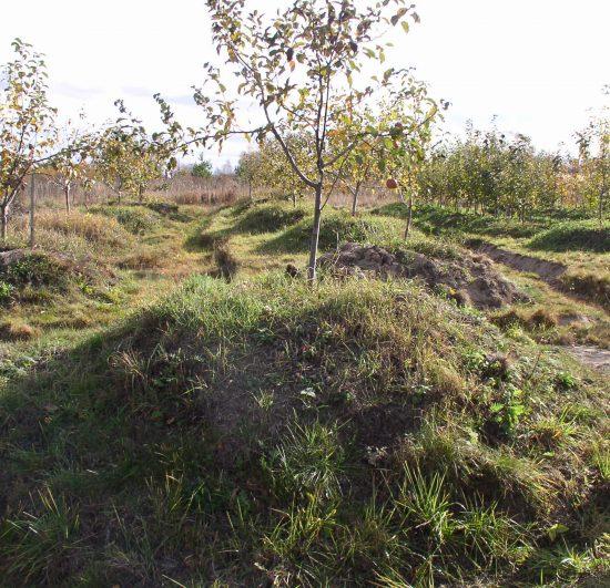 Посаженные на холмиках деревья