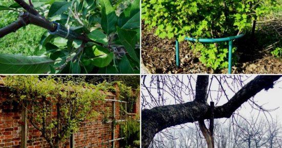 Виды подпорок под плодовые деревья