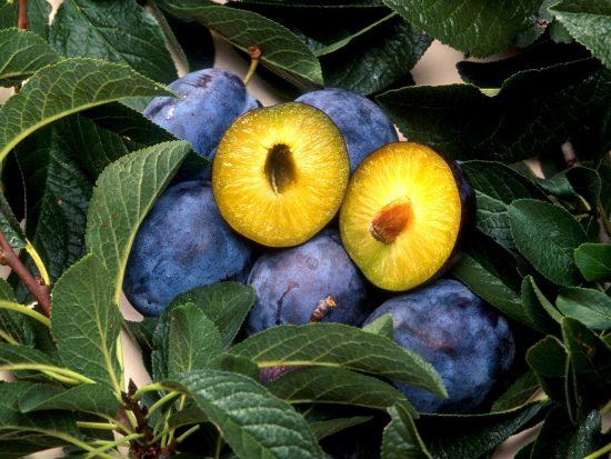 Плоды сливы в разрезе