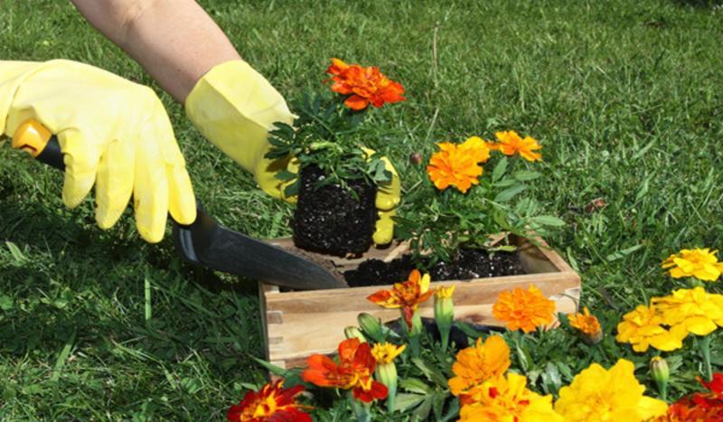 Июнь: что ещё не поздно посадить в огороде