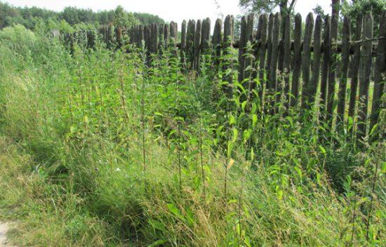 Заросший травой участок