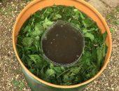 Миниатюра зелёное удобрение