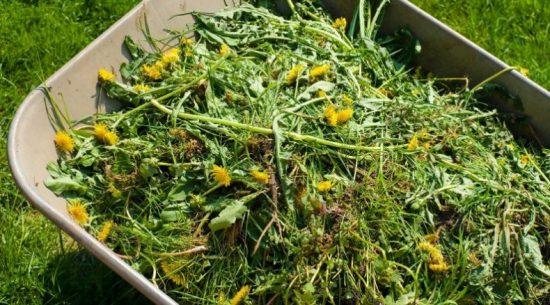 Травы для зелёного удобрения