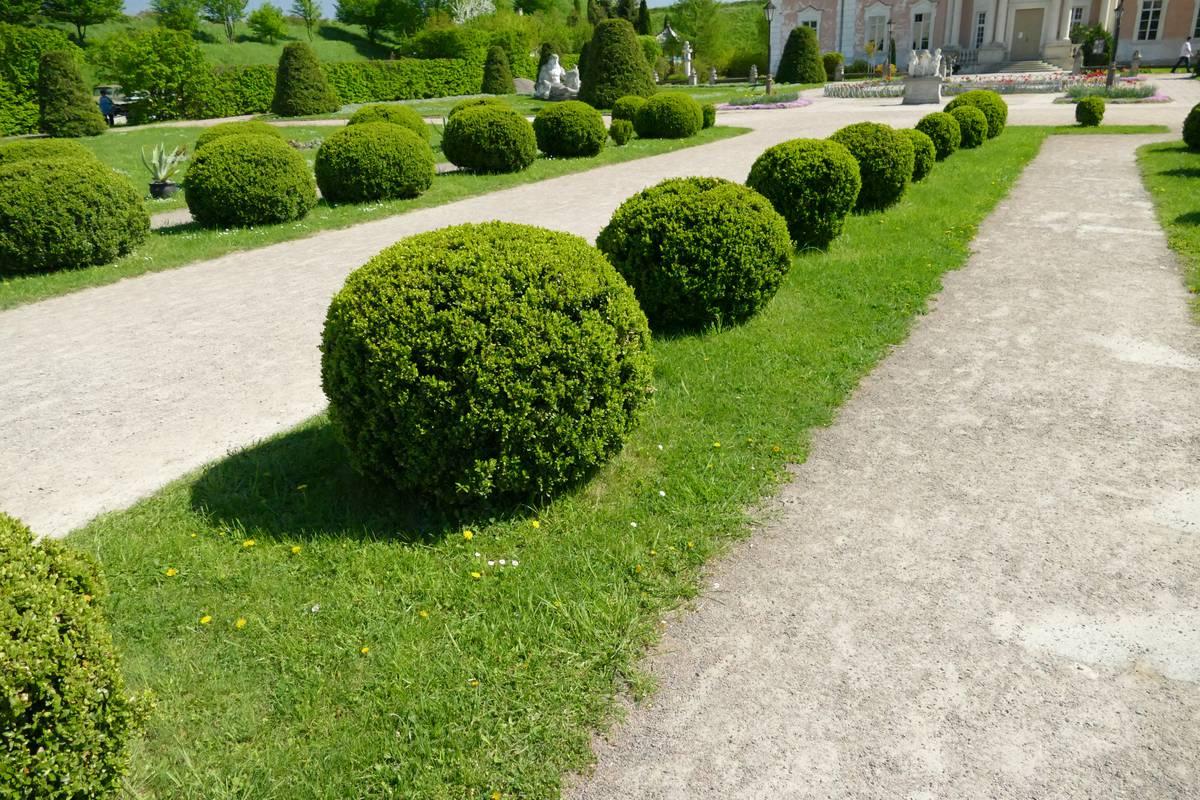 самшиты где посадить в саду фото вот еще, напоследок