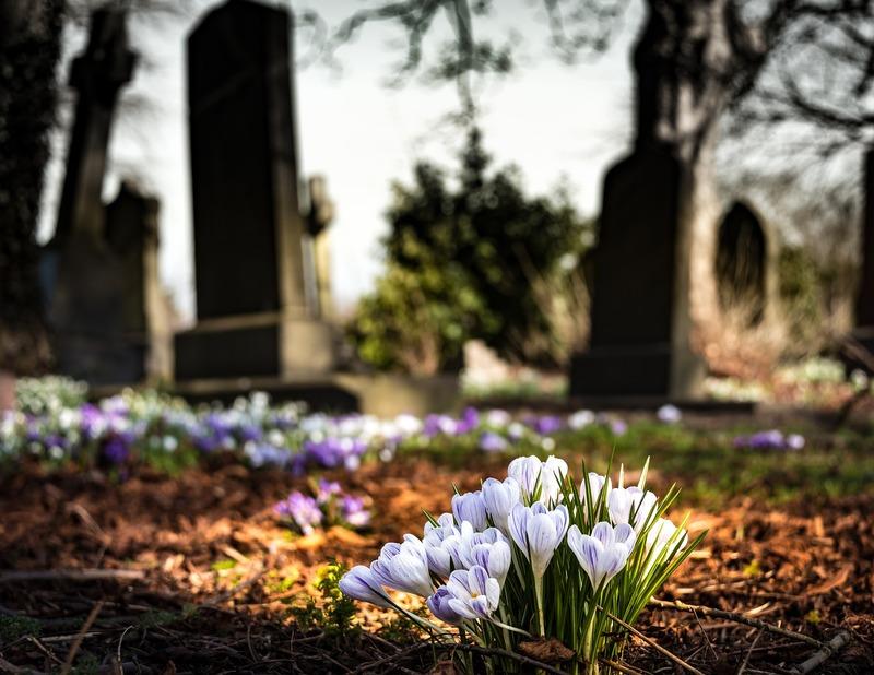 Застывшая красота:какие цветы посадить на кладбище