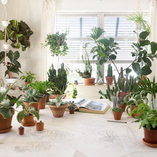 Коллекция комнатных растений