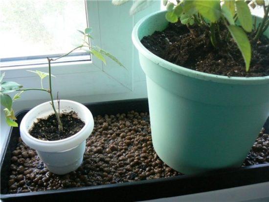 «Ванна» для растений