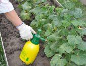 Борная кислота - источник ценного микроэлемента бора для огурцов