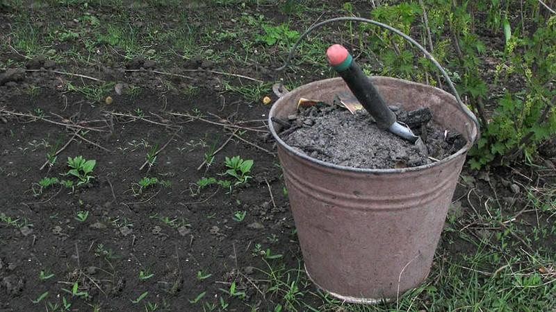 С какими удобрениями нельзя смешивать золу, чтобы не навредить растениям