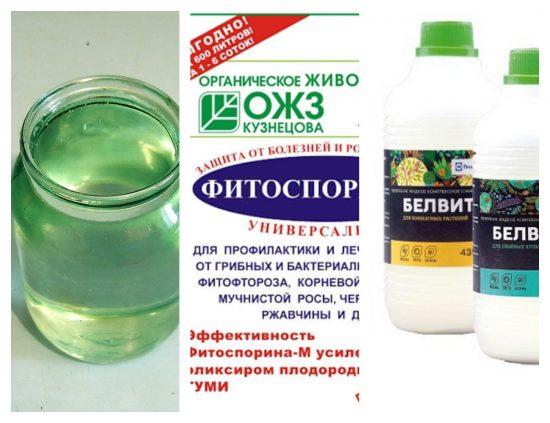 фитоспорин и вода