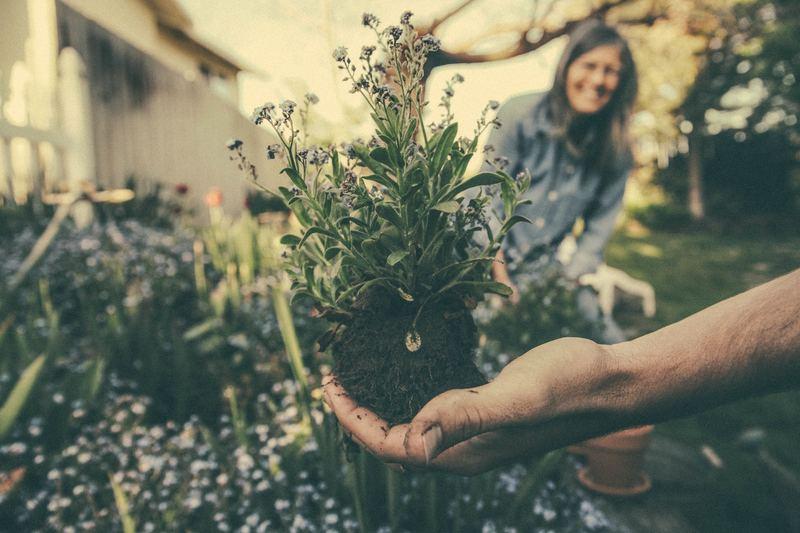 Зелёный гороскоп: лучшие огородники и садовники по знаку зодиака
