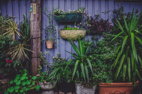 Растения на фоне стены