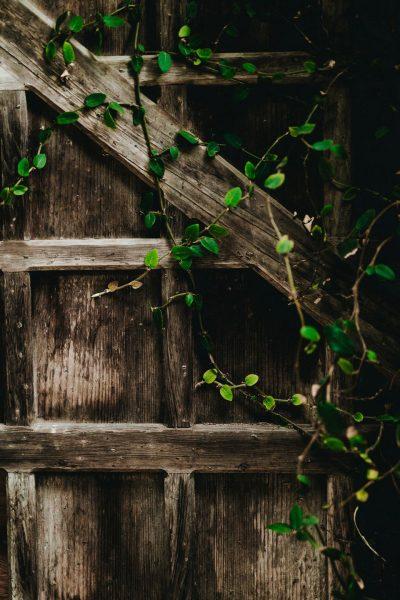 Лоза на деревянной балке