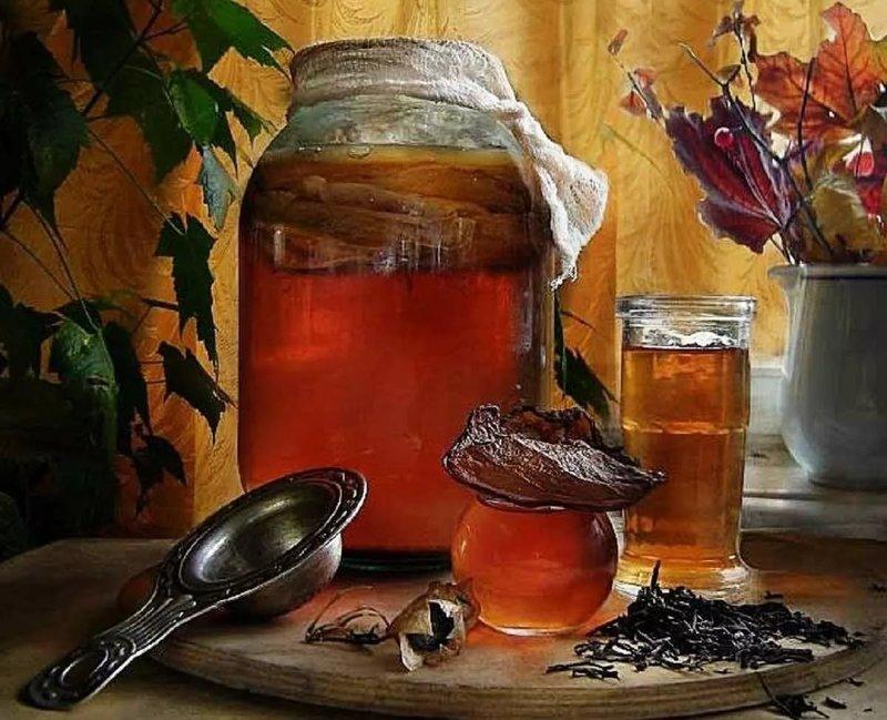 Чайный гриб: как вырастить с нуля в домашних условиях