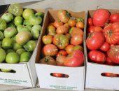 Бланжевые помидоры