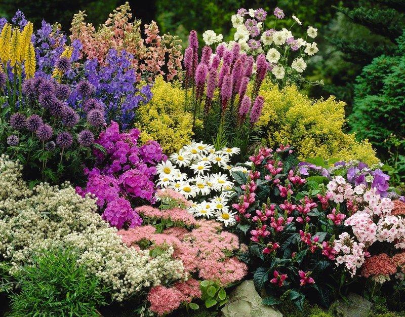Райский сад:многолетники для дачи, цветущие всё лето